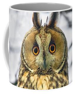 Long Eared Owl 3 Coffee Mug