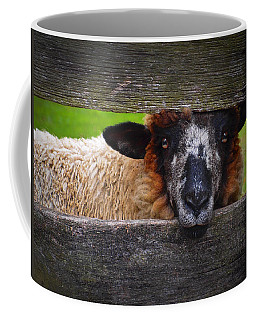 Lookin At Ewe Coffee Mug by Skip Hunt