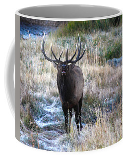 Looking For A Showdown Coffee Mug
