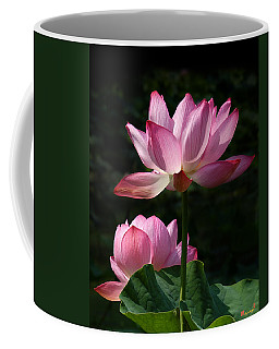 Lotus Beauties--upstaged Dl048 Coffee Mug