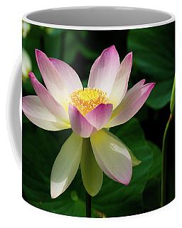 Lotus Lily In Its Final Days Coffee Mug