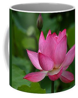 Lotus--shades Of Past And Future Dl029 Coffee Mug