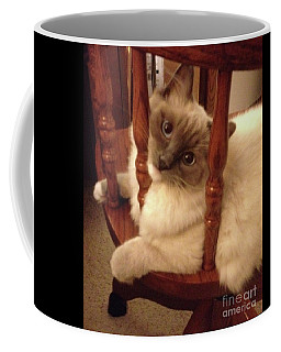 Lovable Ragdoll Kitten Coffee Mug