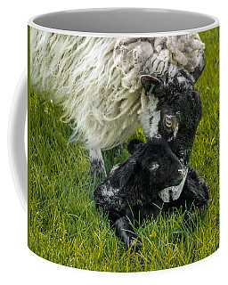 Coffee Mug featuring the photograph Just Born by Nick Bywater