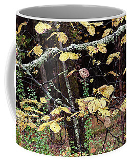Lovely Autumn Witch Hazel -   Coffee Mug