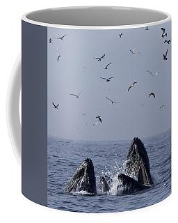 Lunge Feeding Humpback Whales Coffee Mug