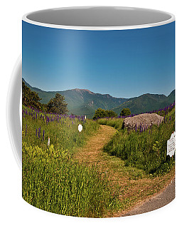 Coffee Mug featuring the photograph Lupine Path To The Notch by Brenda Jacobs