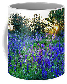 Lupins In The Sunbeam Coffee Mug