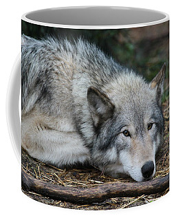 Coffee Mug featuring the photograph Lying In Wait by Laddie Halupa