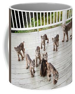Lynx Family Portrait 11x14 Coffee Mug