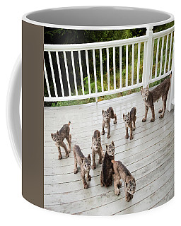 Lynx Family Portrait Coffee Mug