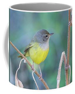 Macgillivray's Warbler 5997-092517-1 Coffee Mug