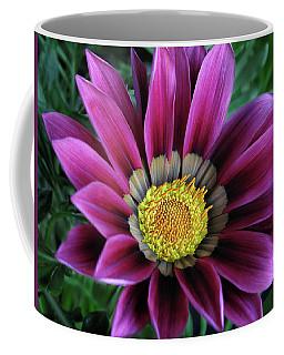 Magenta Gazania Flower Coffee Mug by David and Carol Kelly
