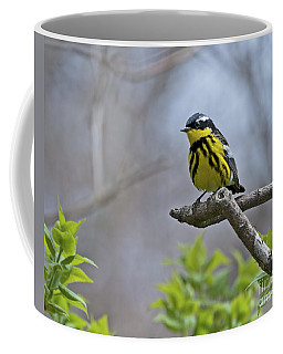 Maggie... Coffee Mug