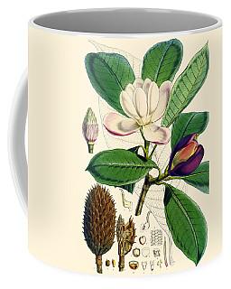 Magnolia Hodgsonii Coffee Mug
