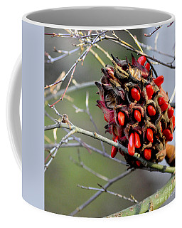 Magnolia Seedhead Coffee Mug by Tanya Searcy