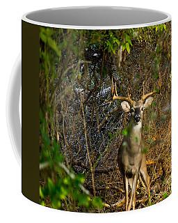Majestic Whitetail Coffee Mug