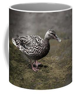 Malard,duckling Coffee Mug
