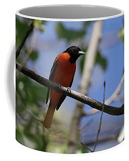 Male Baltimore Oriole Coffee Mug