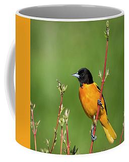 Male Baltimore Oriole Posing Coffee Mug
