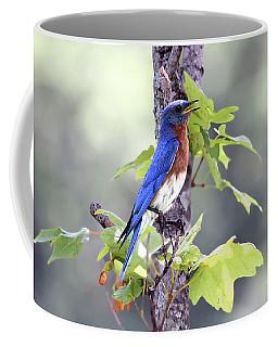 Male Bluebird Coffee Mug