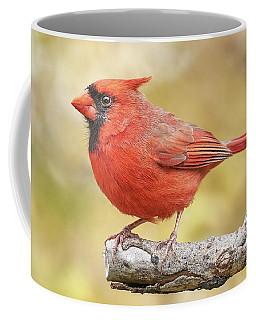 Male Cardinal In Fall Coffee Mug