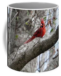 Coffee Mug featuring the photograph Male Cardinal In The Wind by Belinda Lee