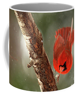 Coffee Mug featuring the photograph Male Cardinal Take Off by Darren Fisher
