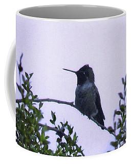 Male Costa's Hummingbird With Lavendar Coffee Mug