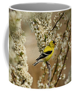 Male Finch In Blossoms Coffee Mug by Cathy  Beharriell