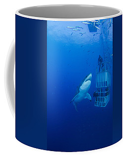 Male Great White With Cage, Guadalupe Coffee Mug