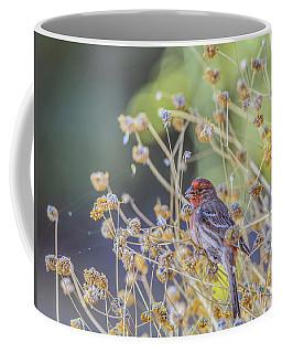 Male House Finch 7335 Coffee Mug by Tam Ryan