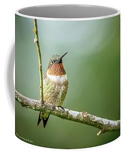 Male Hummingbird In A Tree Coffee Mug
