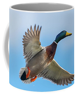 Male Mallard Fly By Coffee Mug