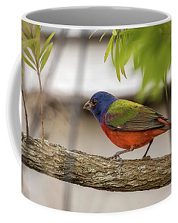Male Painted Bunting Coffee Mug