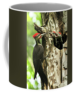 Male Pileated Woodpecker At Nest Coffee Mug