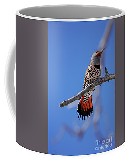 Male Red Shafted Northern Flicker Coffee Mug