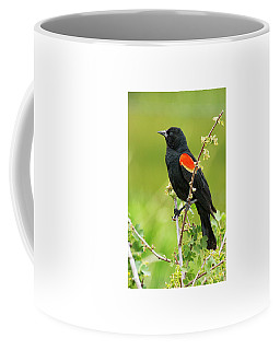 Male Red-winged Blackbird Coffee Mug
