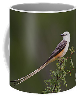 Male Scissor-tail Flycatcher Tyrannus Forficatus Wild Texas Coffee Mug