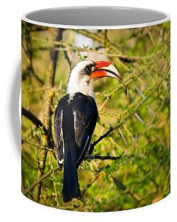 Male Von Der Decken's Hornbill Coffee Mug