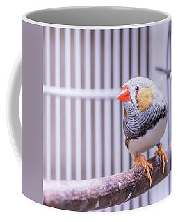 Male Zebra Finch Coffee Mug