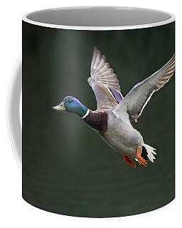 Mallard Drake In Flight Coffee Mug