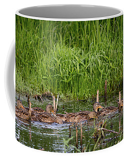 Mallard Hens At Horicon Coffee Mug