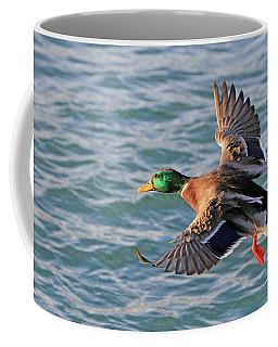 Mallard In Flight 3 Coffee Mug