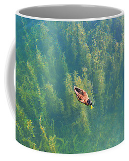 Coffee Mug featuring the photograph Mallard Over Seaweed by SimplyCMB