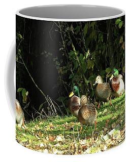 Mallards Walk Coffee Mug