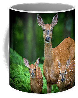 Mama And Fawns Coffee Mug