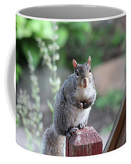 Coffee Mug featuring the photograph Mama Squirrel by Trina Ansel