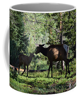 Elk Calf - Mother Rmnp Co Coffee Mug