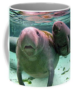 Manatee Mom And Calf Coffee Mug